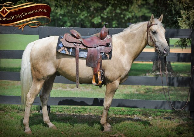 004-Sol-AQHA-Palomino-Gelding-Palo-Duro-Cat-For-Sale