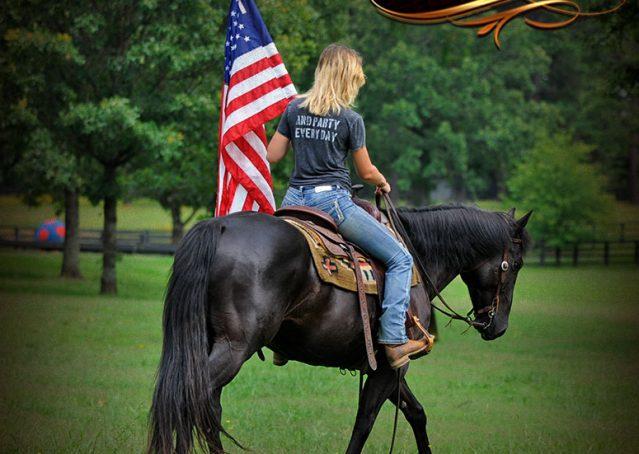 004-Winston-AQHA-Black-Quarter-Horse-gelding-for-sale