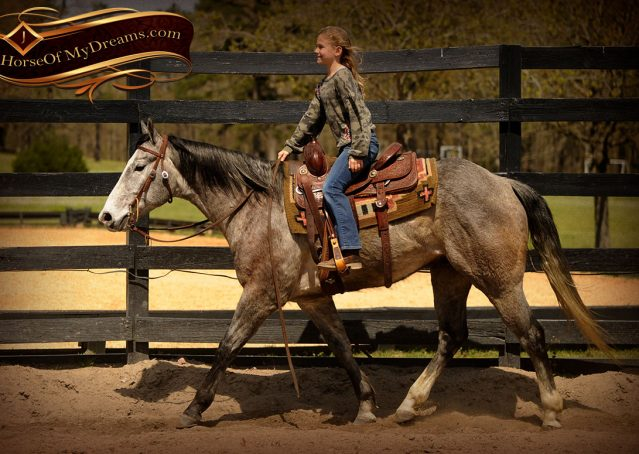 005-Bugsy-Grey-AQHA-Gelding-For-Sale