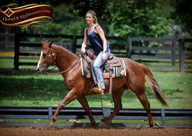005-Dallas-APHA-Red-Dun-Gelding-For-Sale