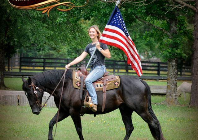 005-Winston-AQHA-Black-Quarter-Horse-gelding-for-sale