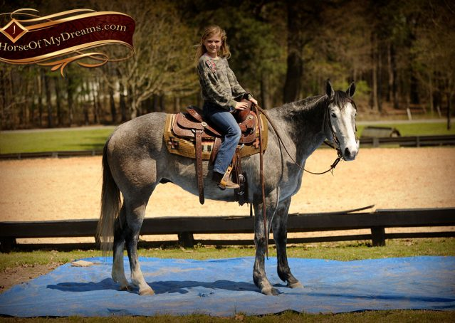006-Bugsy-Grey-AQHA-Gelding-For-Sale