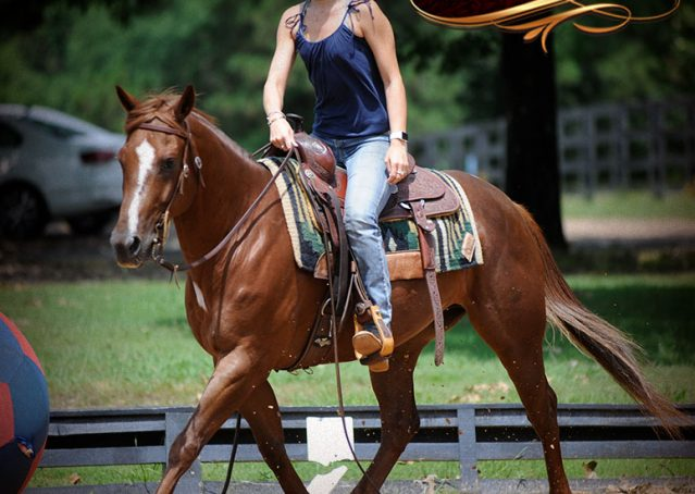 006-Dallas-APHA-Red-Dun-Gelding-For-Sale