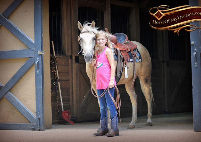 006-Sol-AQHA-Palomino-Gelding-Palo-Duro-Cat-For-Sale