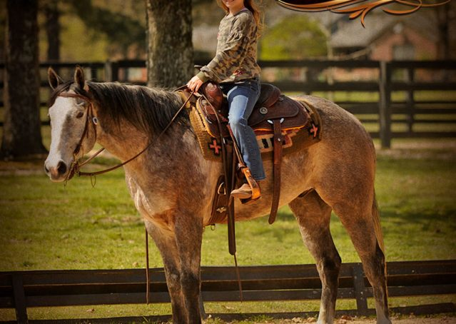 007-Bugsy-Grey-AQHA-Gelding-For-Sale