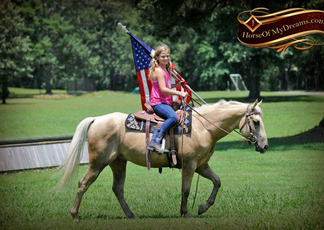 007-Sol-AQHA-Palomino-Gelding-Palo-Duro-Cat-For-Sale