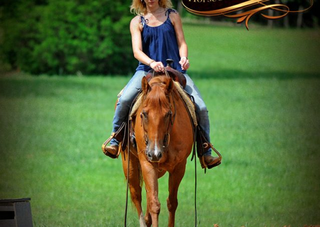 007-Timber-AQHA-Chestnut-Gelding-For-Sale