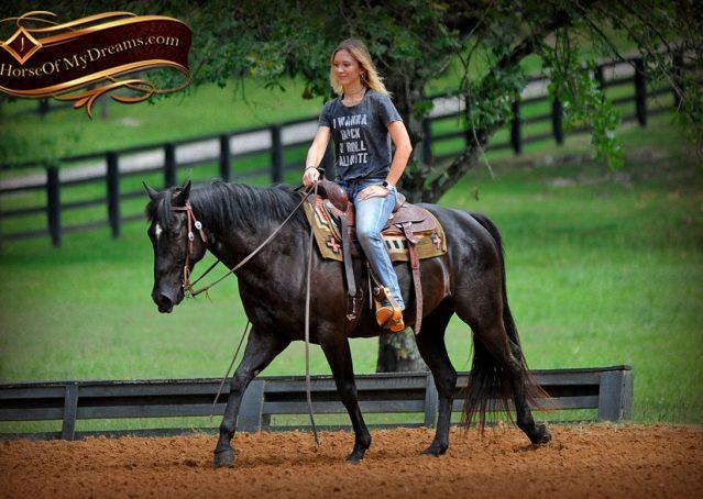007-Winston-AQHA-Black-Quarter-Horse-gelding-for-sale