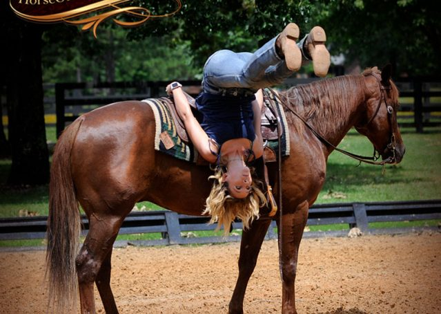 008-Dallas-APHA-Red-Dun-Gelding-For-Sale