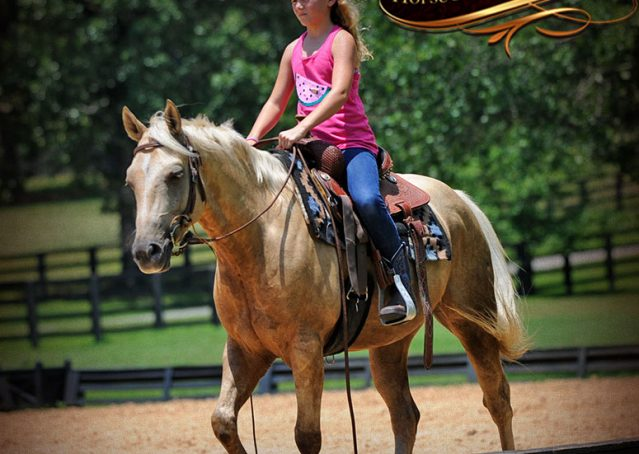 008-Sol-AQHA-Palomino-Gelding-Palo-Duro-Cat-For-Sale
