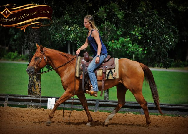 008-Timber-AQHA-Chestnut-Gelding-For-Sale