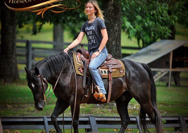 008-Winston-AQHA-Black-Quarter-Horse-gelding-for-sale