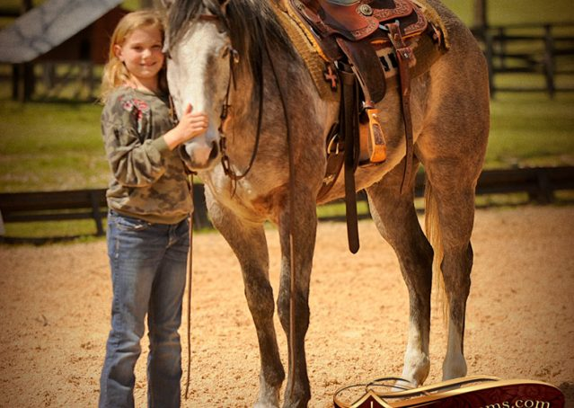 009-Bugsy-Grey-AQHA-Gelding-For-Sale