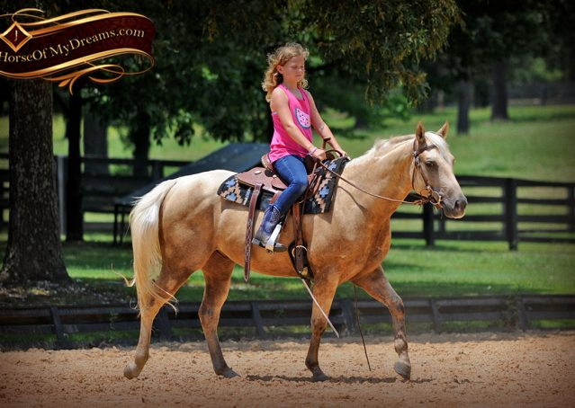 009-Sol-AQHA-Palomino-Gelding-Palo-Duro-Cat-For-Sale