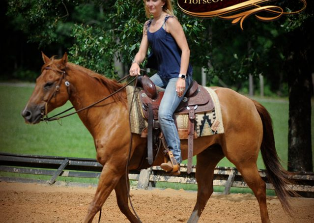 009-Timber-AQHA-Chestnut-Gelding-For-Sale