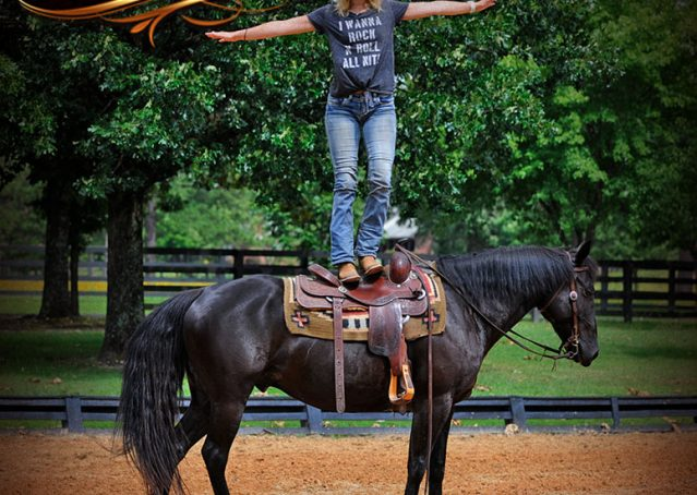 009-Winston-AQHA-Black-Quarter-Horse-gelding-for-sale