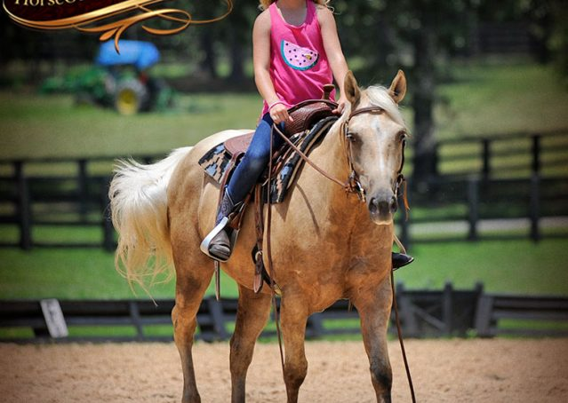 010-Sol-AQHA-Palomino-Gelding-Palo-Duro-Cat-For-Sale