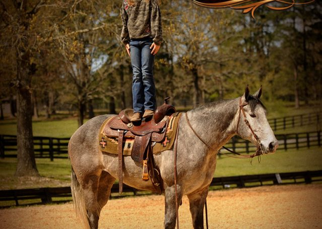 011-Bugsy-Grey-AQHA-Gelding-For-Sale