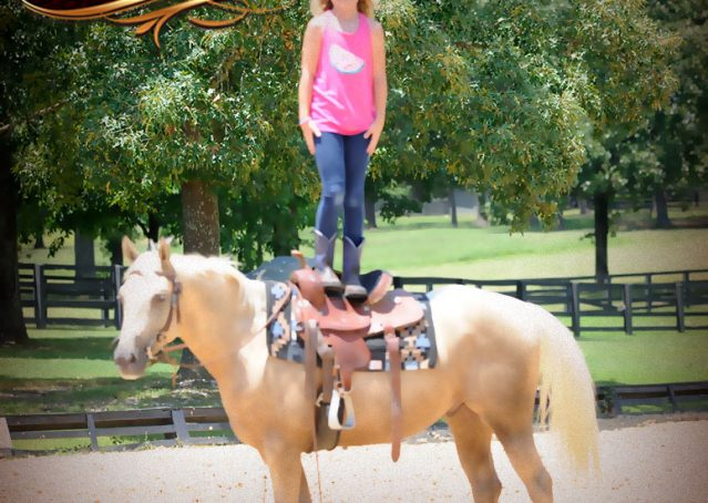 011-Sol-AQHA-Palomino-Gelding-Palo-Duro-Cat-For-Sale