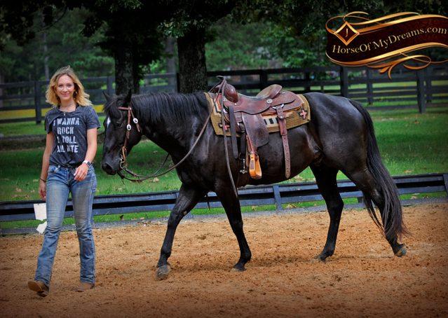 011-Winston-AQHA-Black-Quarter-Horse-gelding-for-sale
