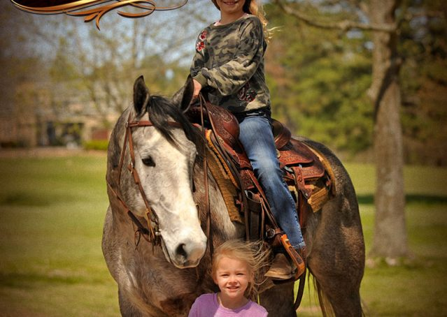 012-Bugsy-Grey-AQHA-Gelding-For-Sale