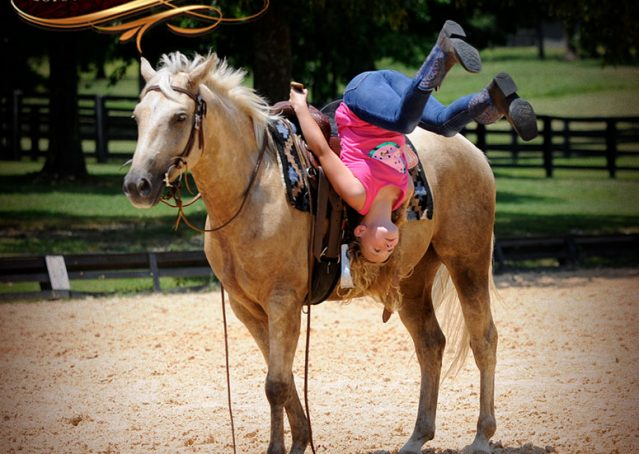012-Sol-AQHA-Palomino-Gelding-Palo-Duro-Cat-For-Sale