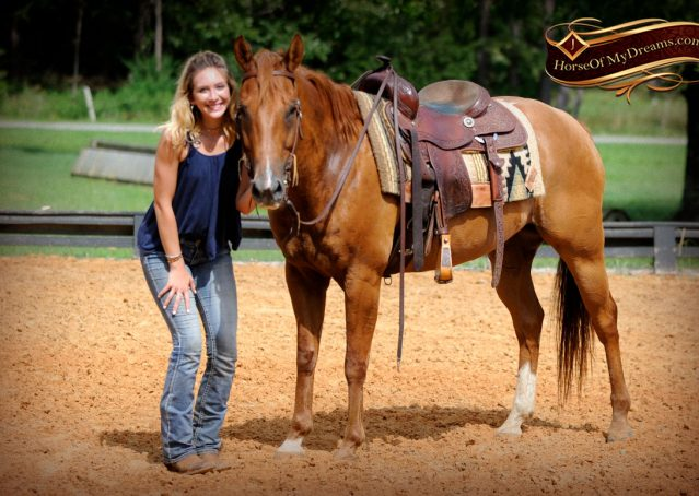 013-Timber-AQHA-Chestnut-Gelding-For-Sale