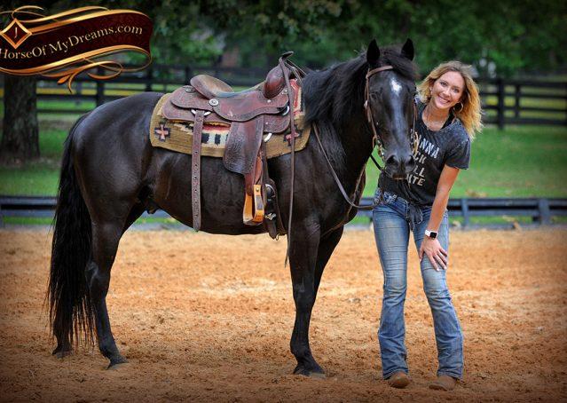 013-Winston-AQHA-Black-Quarter-Horse-gelding-for-sale