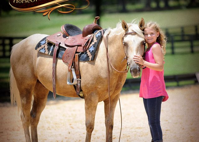 014-Sol-AQHA-Palomino-Gelding-Palo-Duro-Cat-For-Sale