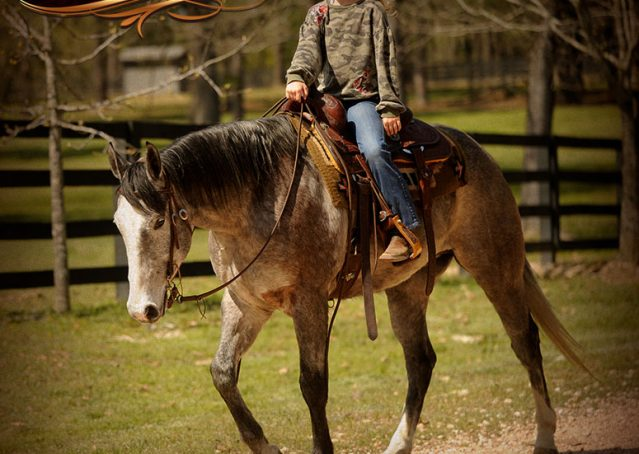 015-Bugsy-Grey-AQHA-Gelding-For-Sale