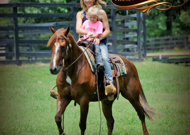 015-Dallas-APHA-Red-Dun-Gelding-For-Sale