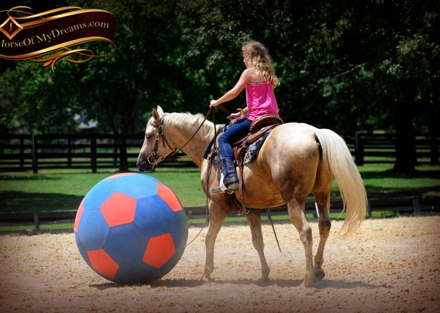 015-Sol-AQHA-Palomino-Gelding-Palo-Duro-Cat-For-Sale