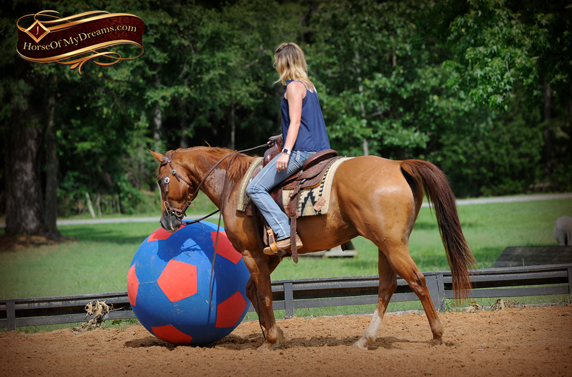015-Timber-AQHA-Chestnut-Gelding-For-Sale | Horse of My Dreams - photo#49