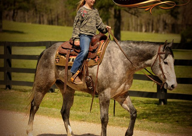 017-Bugsy-Grey-AQHA-Gelding-For-Sale