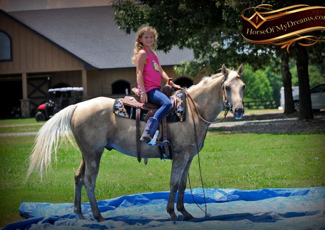 017-Sol-AQHA-Palomino-Gelding-Palo-Duro-Cat-For-Sale