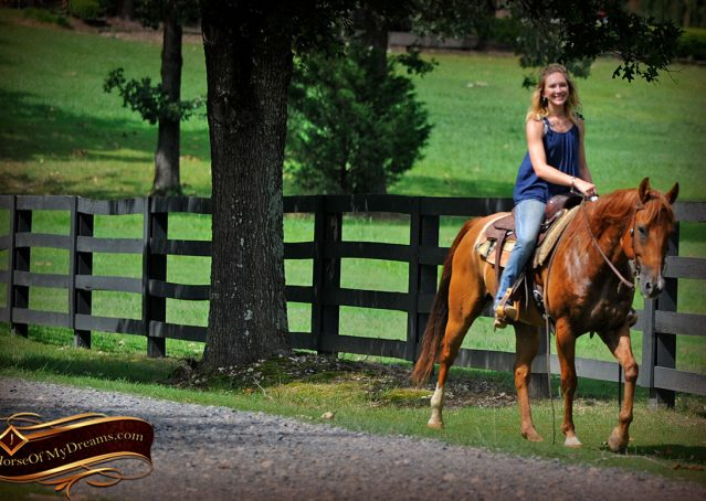 017-Timber-AQHA-Chestnut-Gelding-For-Sale