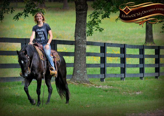 017-Winston-AQHA-Black-Quarter-Horse-gelding-for-sale