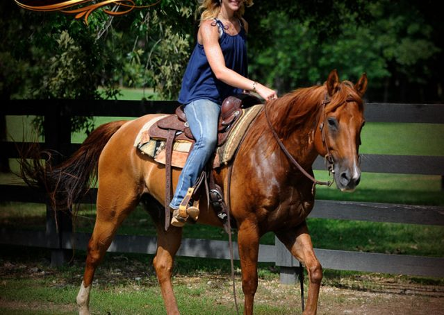 018-Timber-AQHA-Chestnut-Gelding-For-Sale