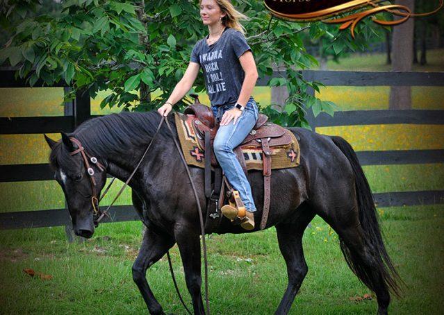 018-Winston-AQHA-Black-Quarter-Horse-gelding-for-sale