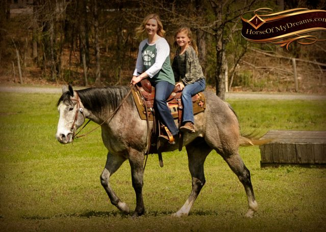 019-Bugsy-Grey-AQHA-Gelding-For-Sale