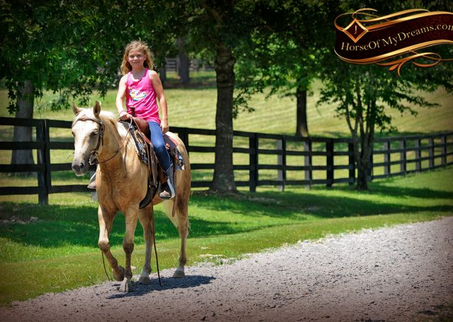 019-Sol-AQHA-Palomino-Gelding-Palo-Duro-Cat-For-Sale