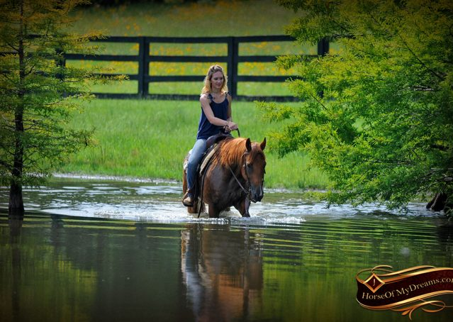 019-Timber-AQHA-Chestnut-Gelding-For-Sale
