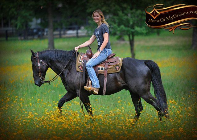 019-Winston-AQHA-Black-Quarter-Horse-gelding-for-sale