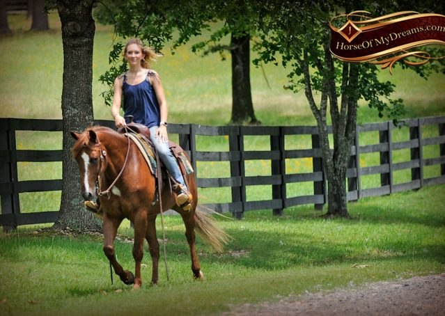 020-Dallas-APHA-Red-Dun-Gelding-For-Sale