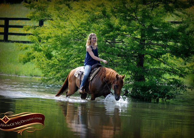 020-Timber-AQHA-Chestnut-Gelding-For-Sale