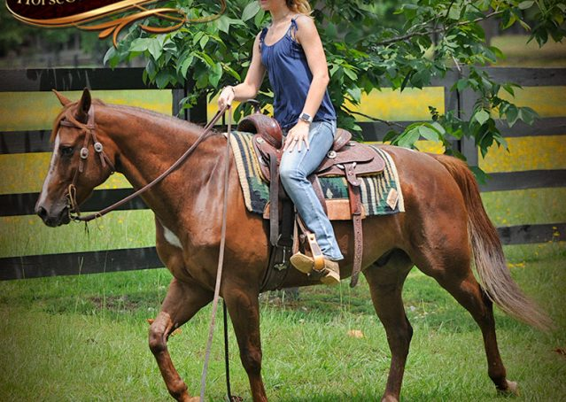 021-Dallas-APHA-Red-Dun-Gelding-For-Sale