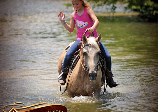 021-Sol-AQHA-Palomino-Gelding-Palo-Duro-Cat-For-Sale