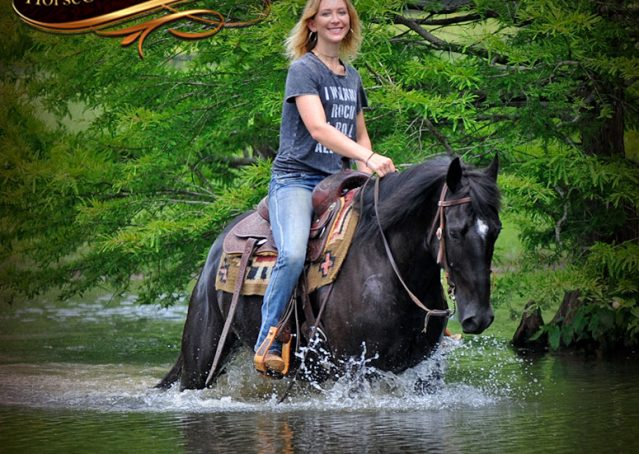 021-Winston-AQHA-Black-Quarter-Horse-gelding-for-sale