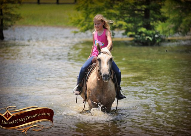 022-Sol-AQHA-Palomino-Gelding-Palo-Duro-Cat-For-Sale