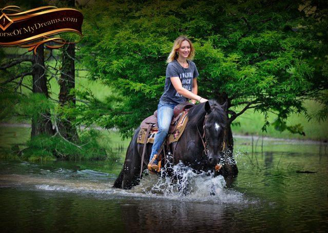 022-Winston-AQHA-Black-Quarter-Horse-gelding-for-sale